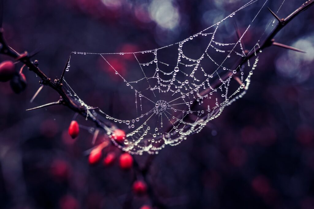 Spider web - article on living with narcissist